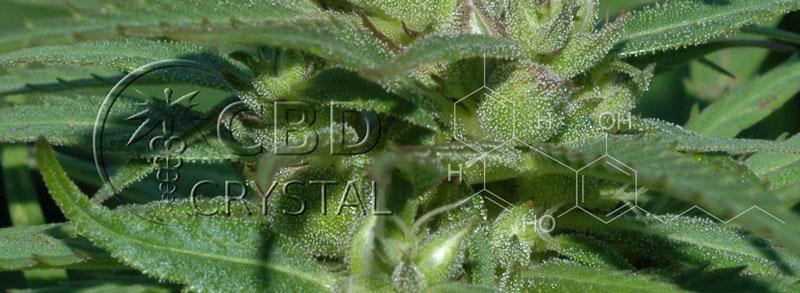 crystalcbd