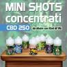 Mini Shot Cannabis Concentrato CBD 250 10ml