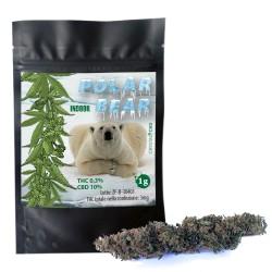 Polar Bear 1g