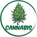 Cannabis Flavor